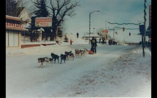 FHQ sled dogs